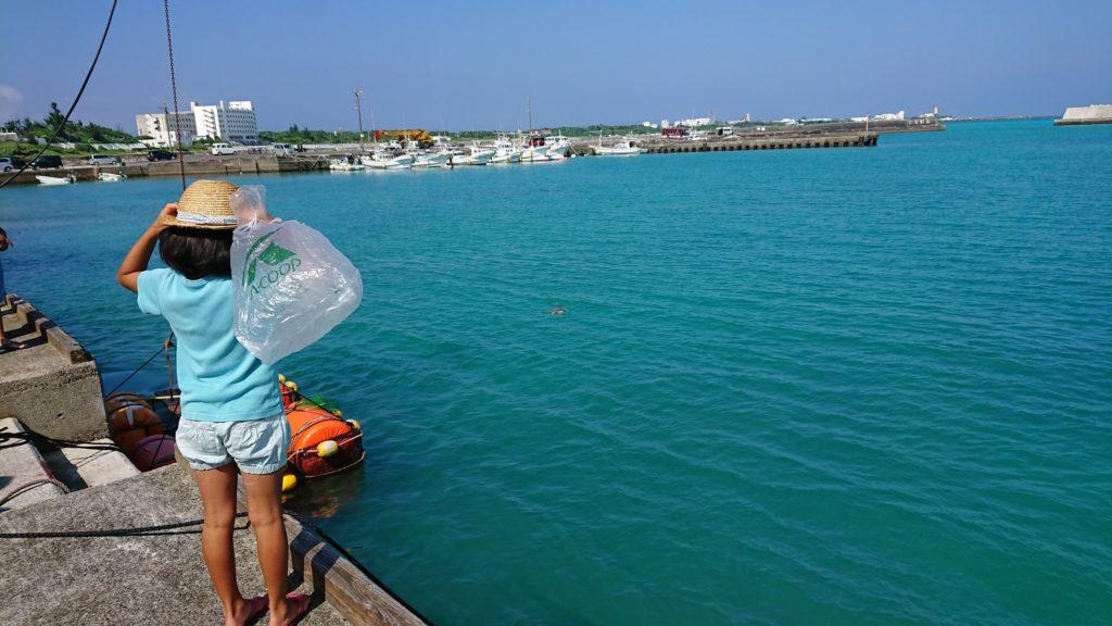 与論島・漁港でウミガメを見る